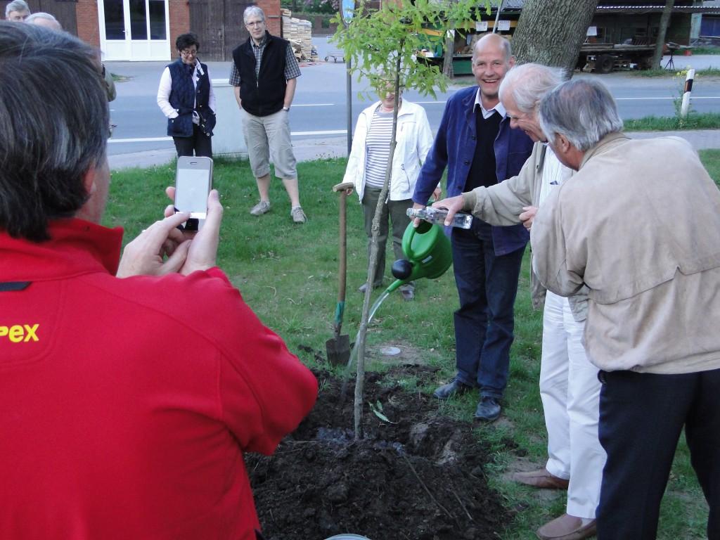 Baum gepflanzt vor dem Olen Hus