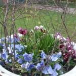 Frühling am Olen Huus